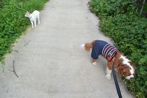 004散歩3
