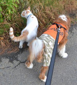 006散歩