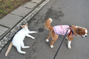 014散歩4