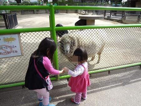 zoo 007