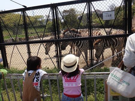 朝動物園 021
