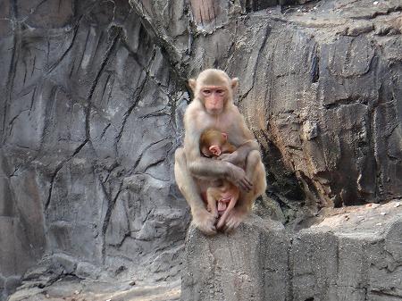 動物園 019