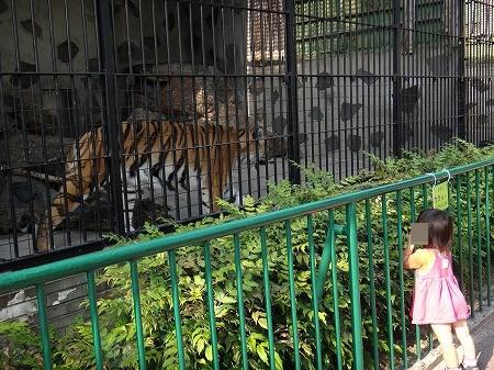 動物園 028