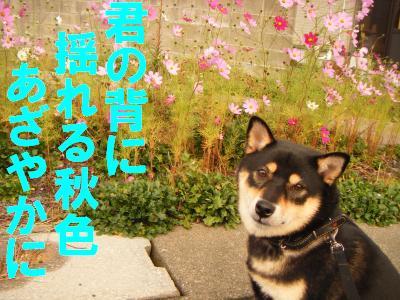 cosumosu1.jpg