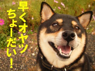 cosumosu3.jpg