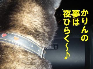 egi_20110930194349.jpg