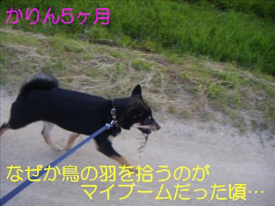 omoide4.jpg