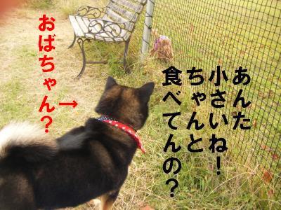 ran4_20111010224527.jpg