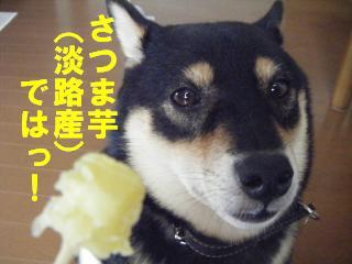 satumaimo9_20110925203040.jpg