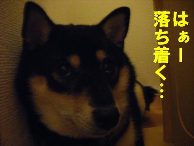 terebi3.jpg