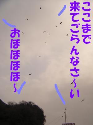 umi6.jpg