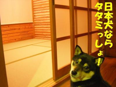 wakayama18.jpg