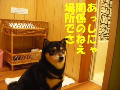 wakayama19.jpg