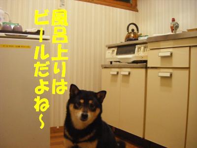 wakayama20.jpg