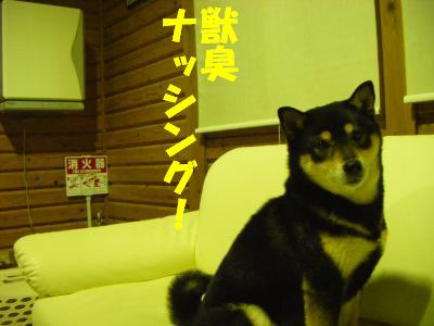 wakayama41.jpg