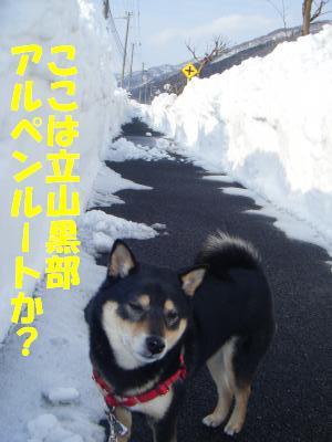 yukiyama1.jpg