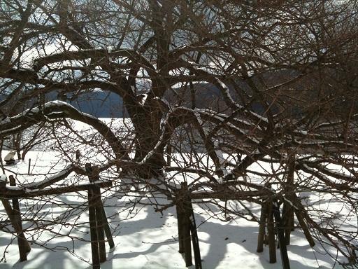 018-snow.jpg