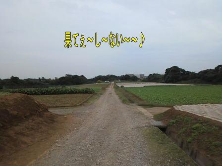 c101021-4w.jpg