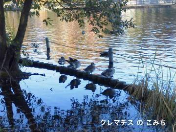 201112041413000_convert_20111208220945-2.jpg