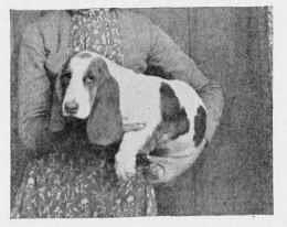 1877bassetpuppy.jpg