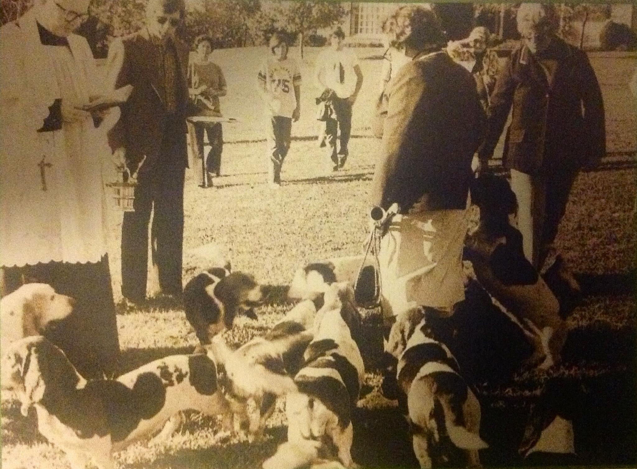 Tantivy Basset Hound Pack1975