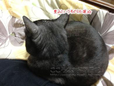 hizaribu001-02-2013.jpg