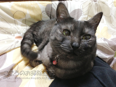hizaribu002-02-2013.jpg