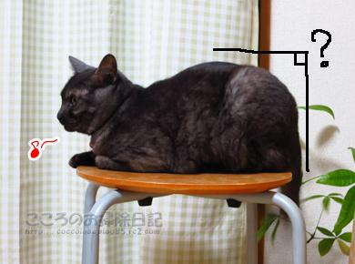 isuribu006-01-2013.jpg