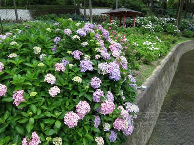 mimurotoji005-06-2013.jpg