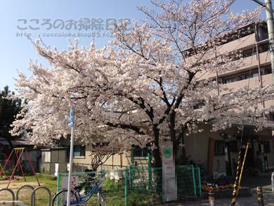 sakura002-03-2013.jpg