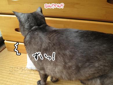 shushokuiwai004-04-2013.jpg