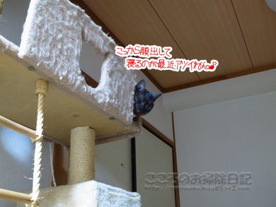 tawa-ribu006-01-2012.jpg