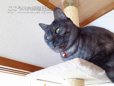 tawa-ribu008-01-2013.jpg