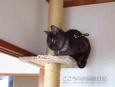 tawa-ribu010-01-2013.jpg
