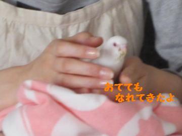 20110516.jpg
