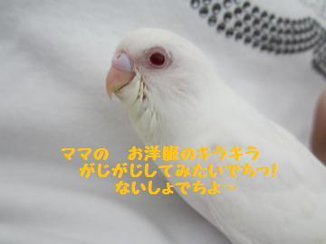 20110519-1.jpg