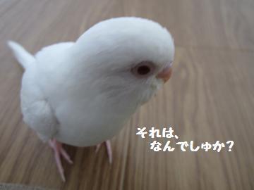 20110519.jpg