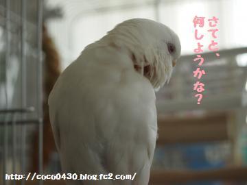 20130416-6.jpg