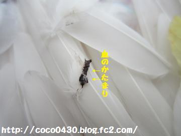 20130422-9.jpg