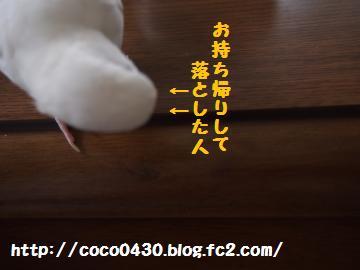 20130606-9.jpg