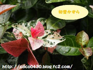 20130607-6.jpg