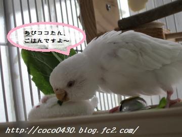 ちびココちゃん1