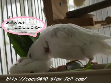 ちびココちゃん2