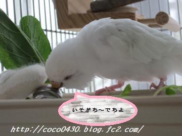 鈴ちゃんのお世話2