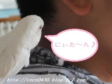 にぃたんとココちゃん2