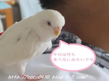 にぃたんとココちゃん3
