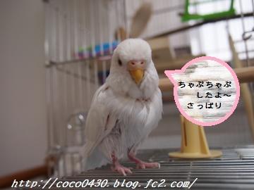 水浴び20130618