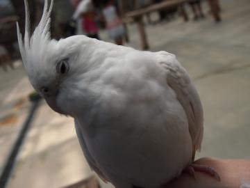 神戸花鳥園12
