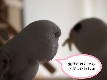 ココちゃんとデカココちゃん2