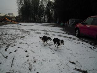 雪上を激走!